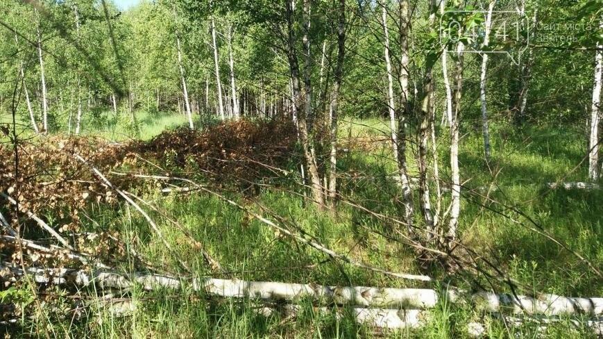 Звягельчанин повідомив про незаконну порубку лісу у Новоград-Волинському районі, фото-3