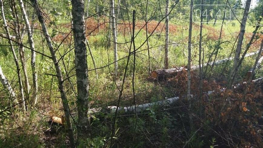 Звягельчанин повідомив про незаконну порубку лісу у Новоград-Волинському районі, фото-1
