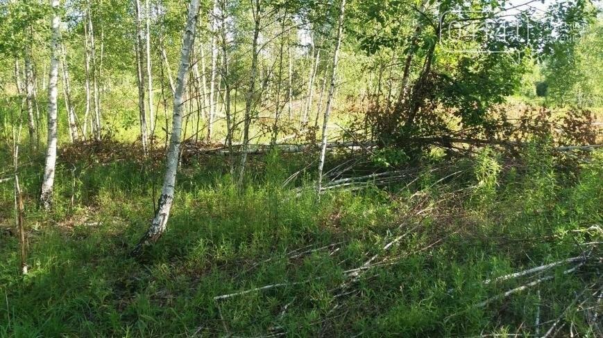 Звягельчанин повідомив про незаконну порубку лісу у Новоград-Волинському районі, фото-4
