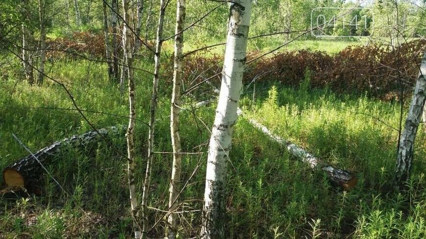 Звягельчанин повідомив про незаконну порубку лісу у Новоград-Волинському районі, фото-2