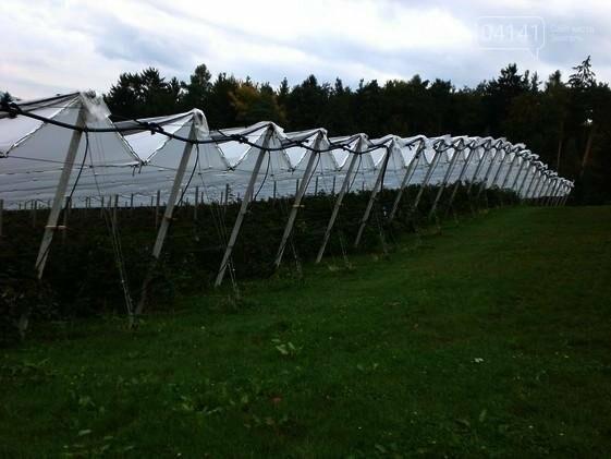 Компанія з Новоград-Волинщини знайшла спосіб пришвидшити дозрівання лохини, фото-1