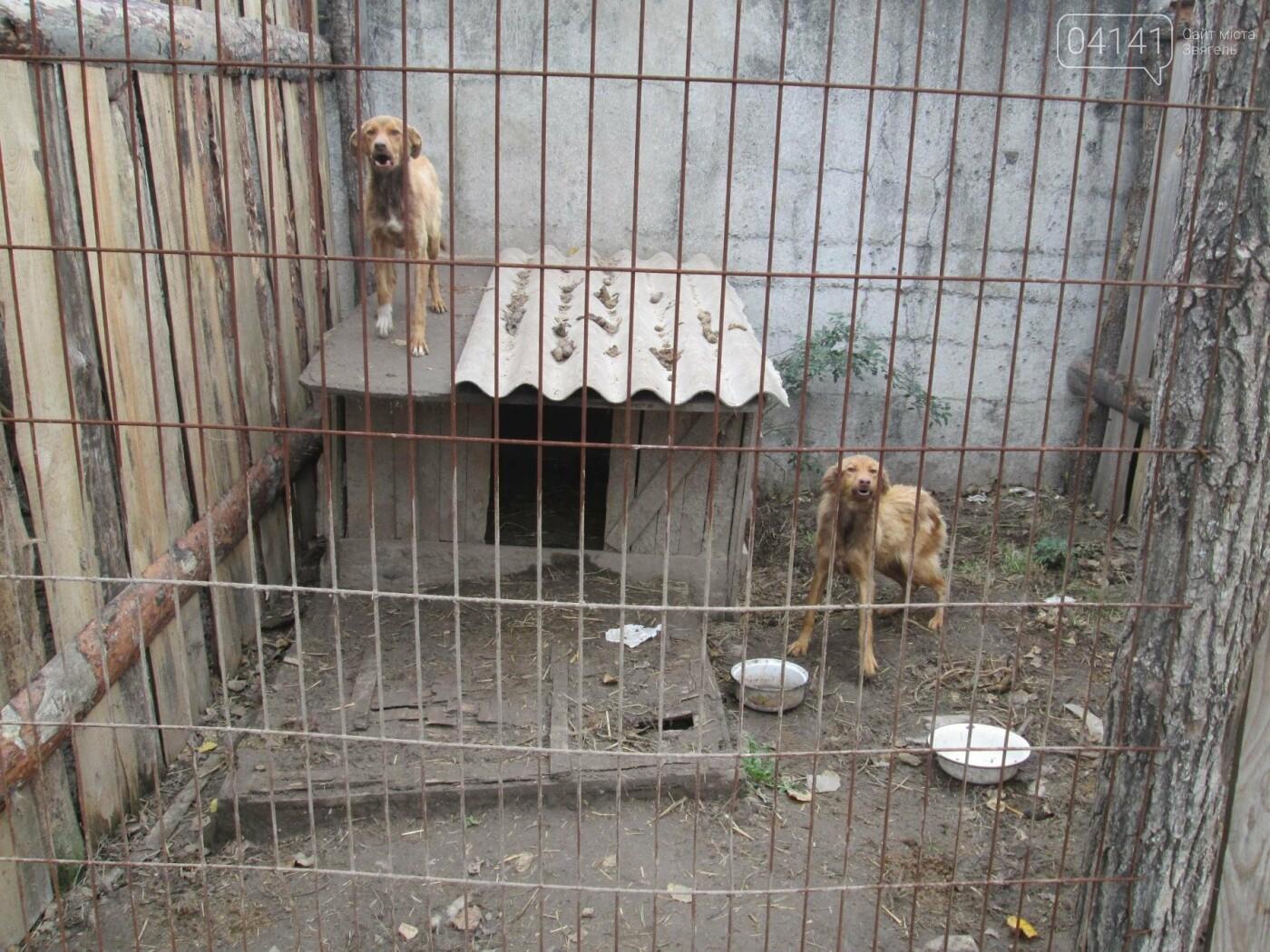 """Як вирішуюся """"собачі"""" питання у Новограді-Волинському? (ФОТО), фото-5"""