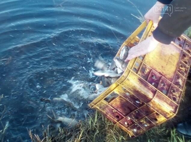 Ставок площею 54,5 га має намір здати в оренду Новоград-Волинське міжрайонне управління водного господарства, фото-2