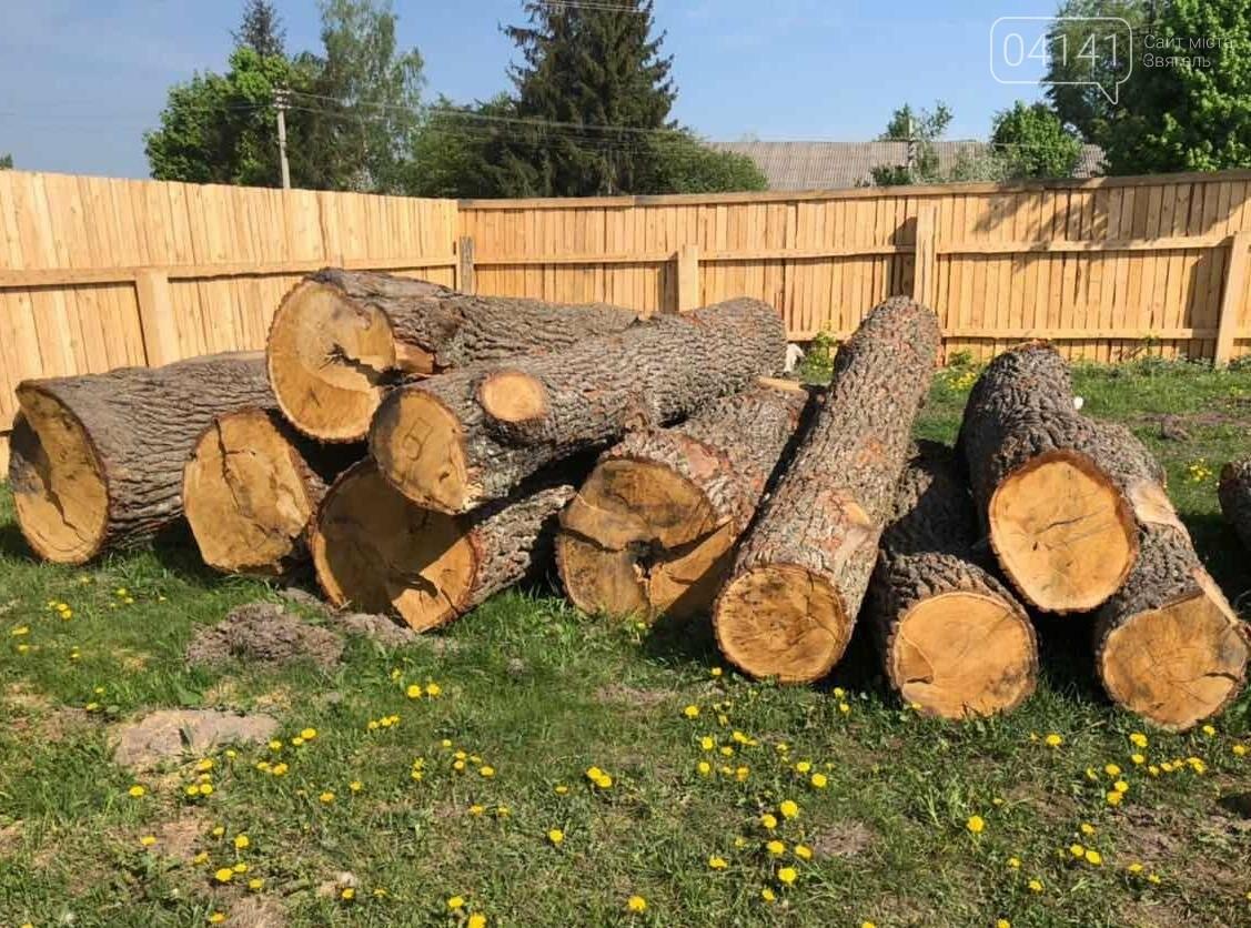 """В рамках """"Городницької справи"""" поліція накрила пилораму, де зберігалася незаконно зрубана деревина, фото-2"""
