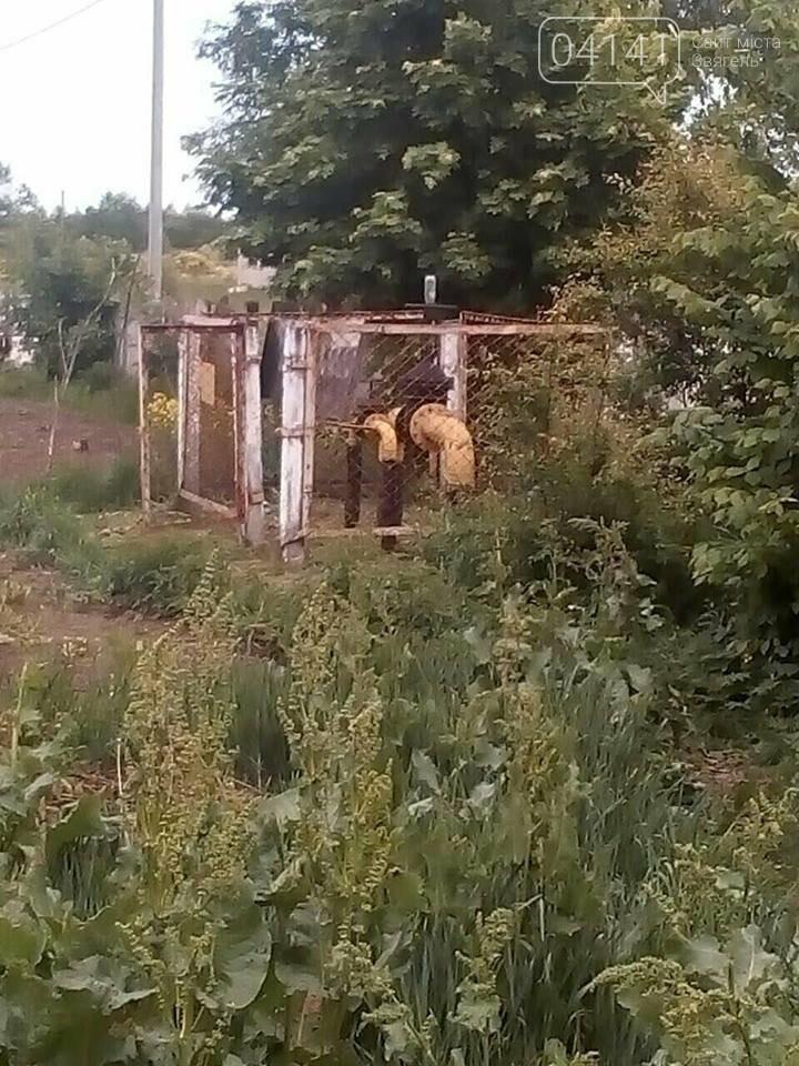 У Новограді-Волинському виявили небезпечну знахідку, фото-1