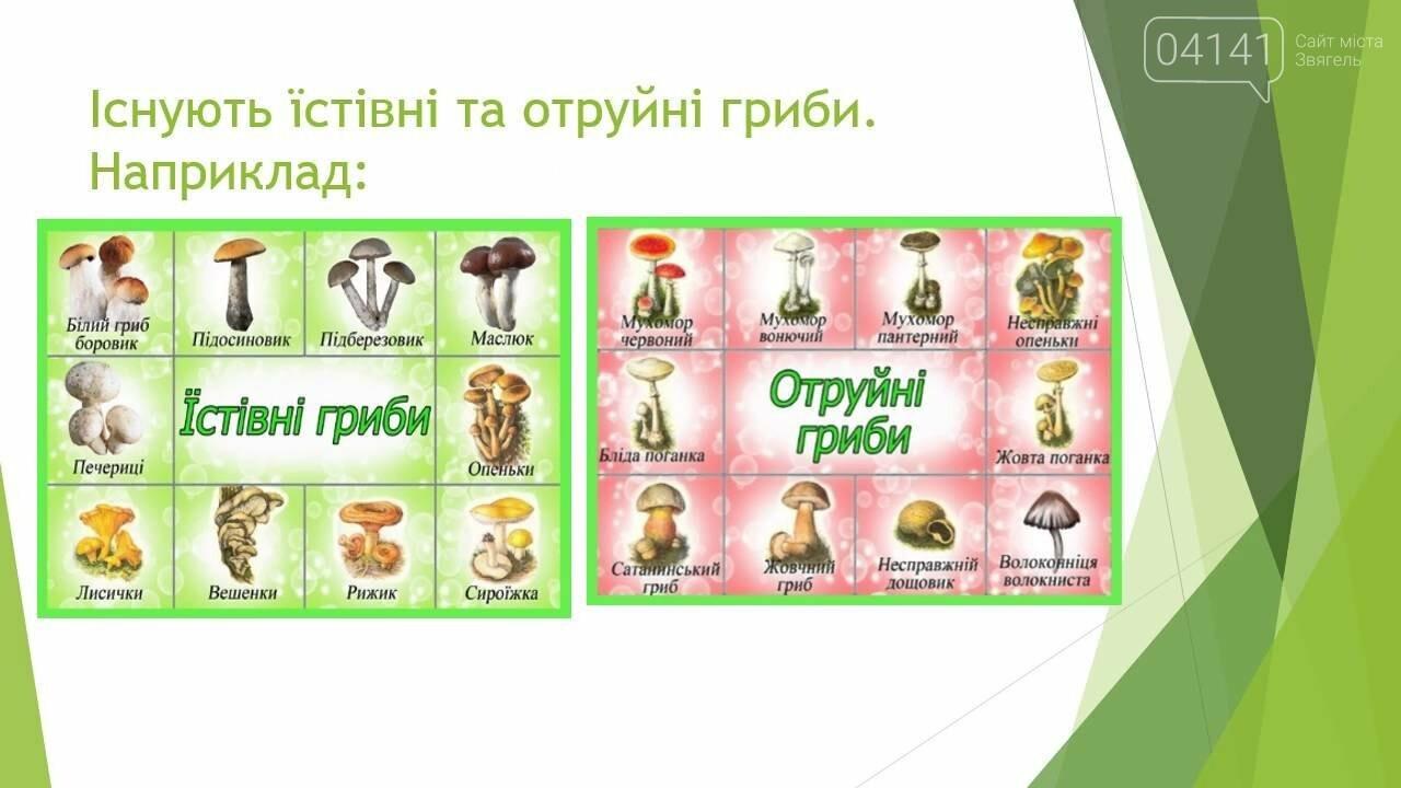 Де збирати гриби під Новоградом-Волинським і як ними не отруїтися?, фото-3