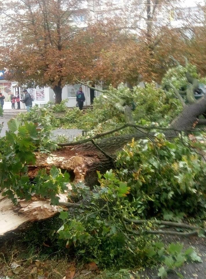 У Новограді-Волинському вітер наробив лиха (ФОТО, ВІДЕО), фото-7