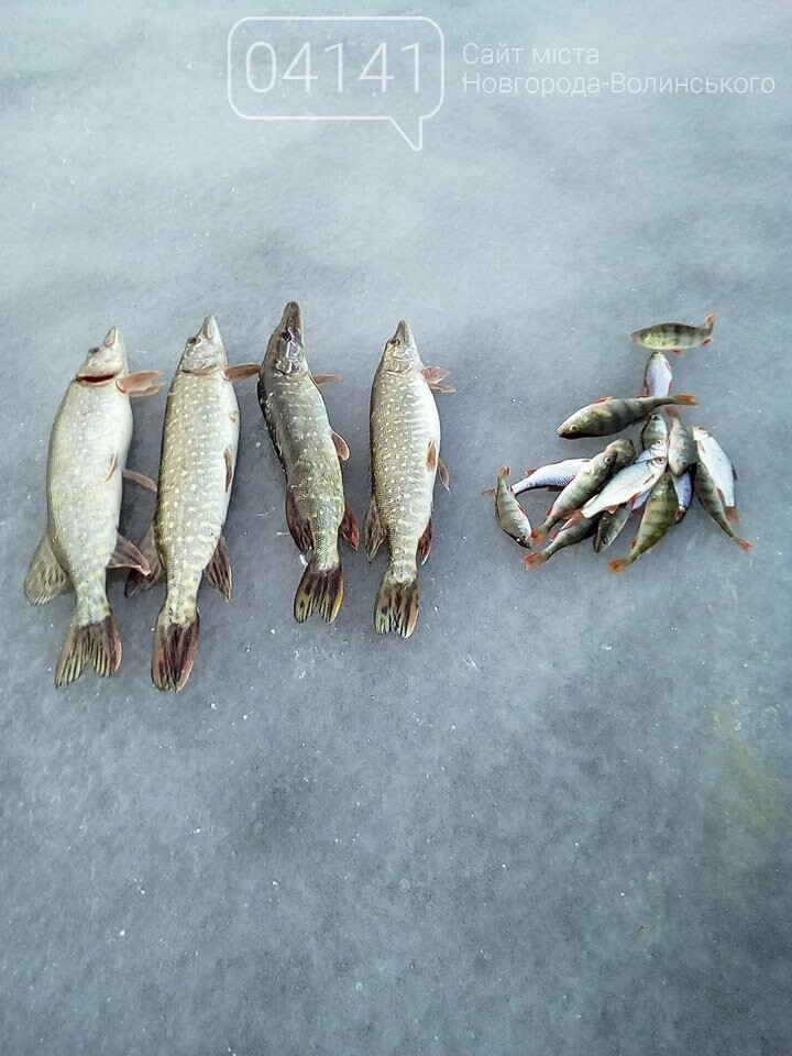 """Щука """"зачотна"""": Рибалки діляться світлинами здобутих трофеїв на Житомирщині, фото-2"""