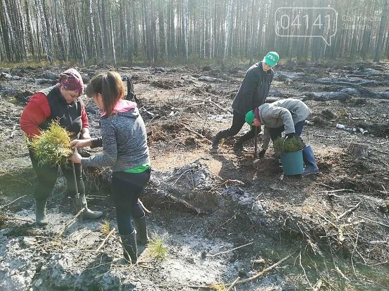 Школярі з Новоград-Волинського району висадили гектар лісу, фото-1