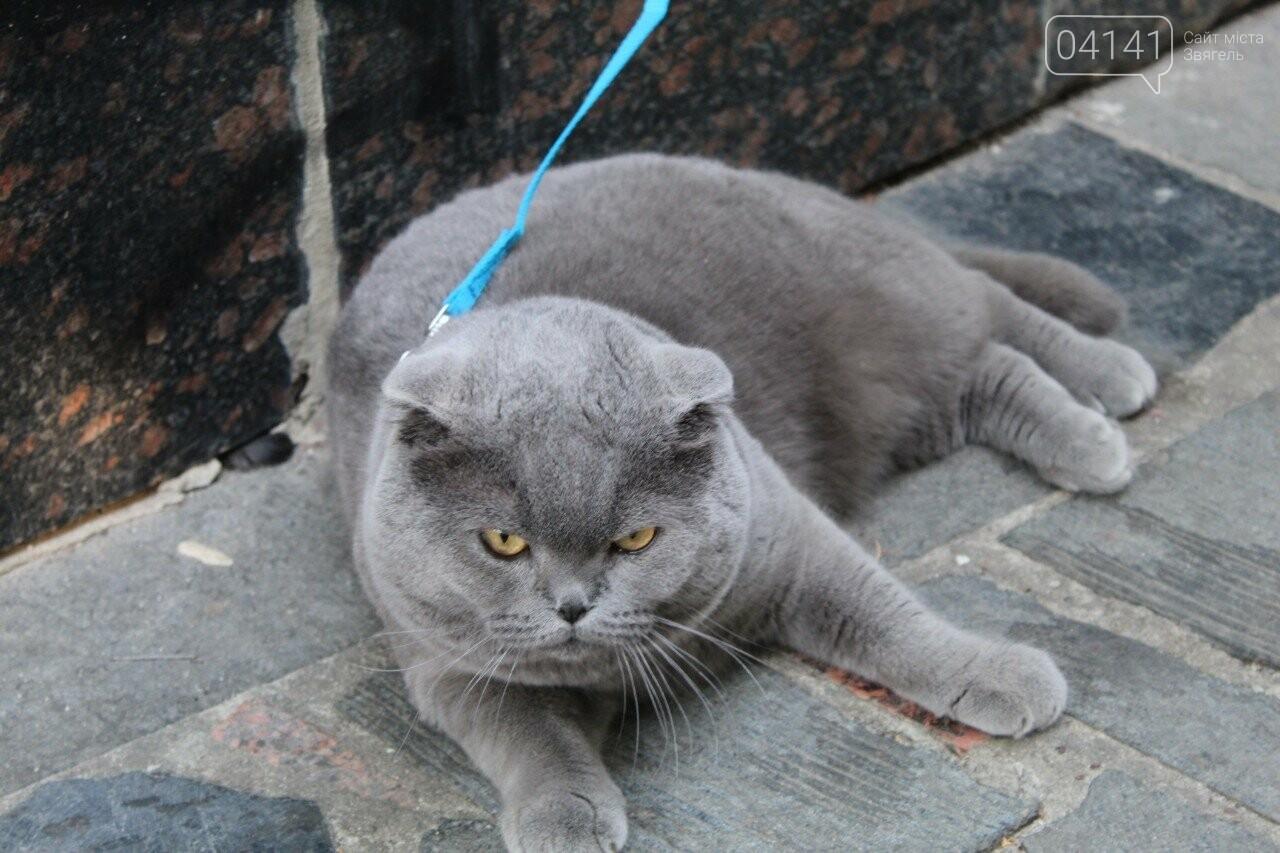 Мі-мі 2019: У Новограді-Волинському проходить фестиваль домашніх тварин (ФОТО, ВІДЕО), фото-6