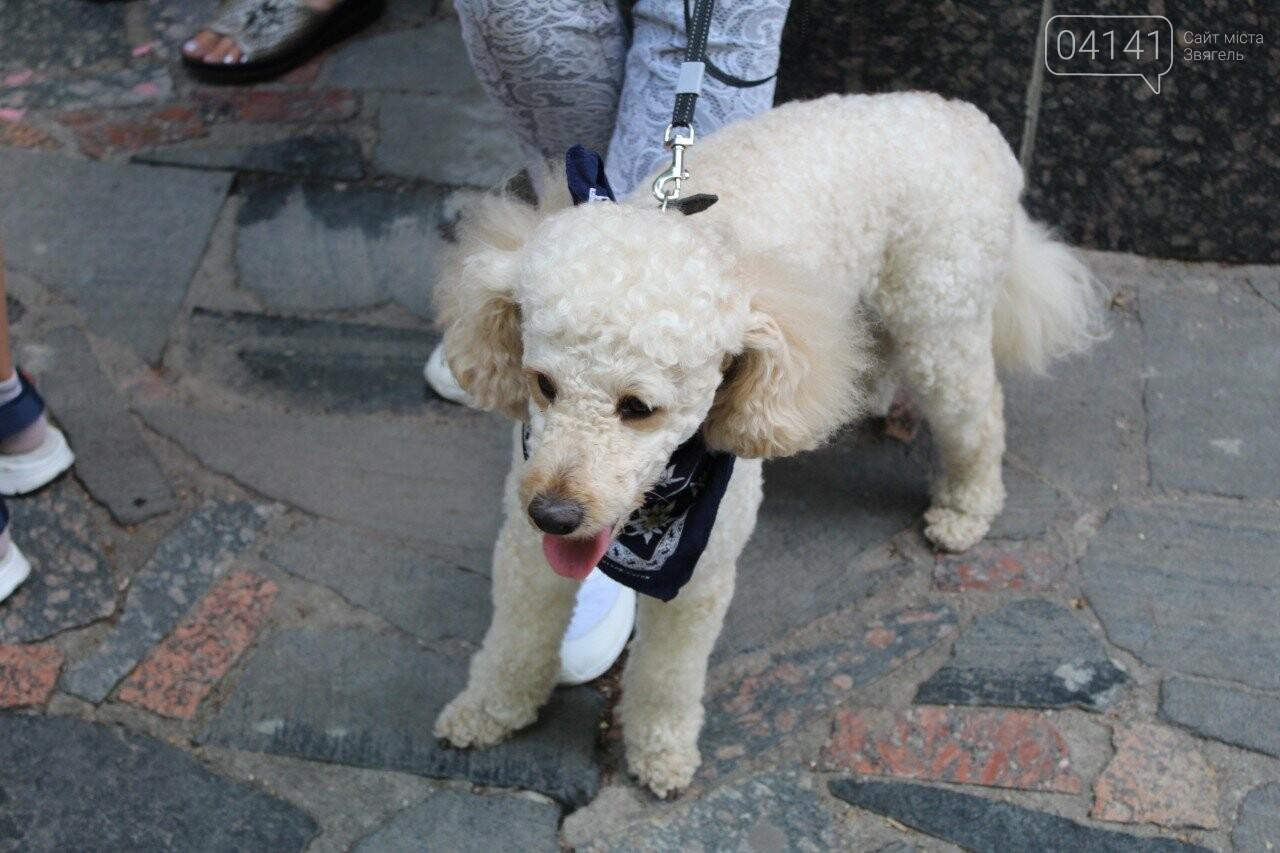 Мі-мі 2019: У Новограді-Волинському проходить фестиваль домашніх тварин (ФОТО, ВІДЕО), фото-9