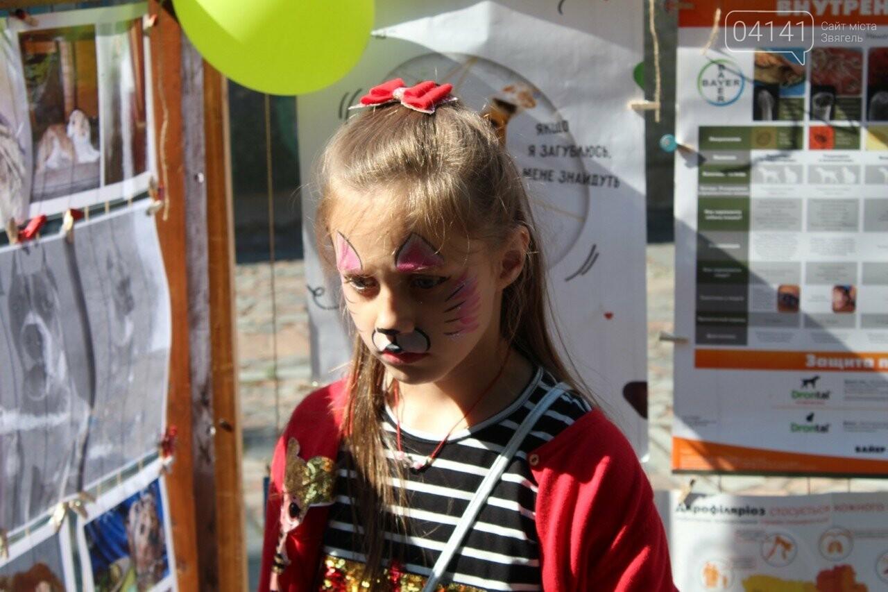 Мі-мі 2019: У Новограді-Волинському проходить фестиваль домашніх тварин (ФОТО, ВІДЕО), фото-4