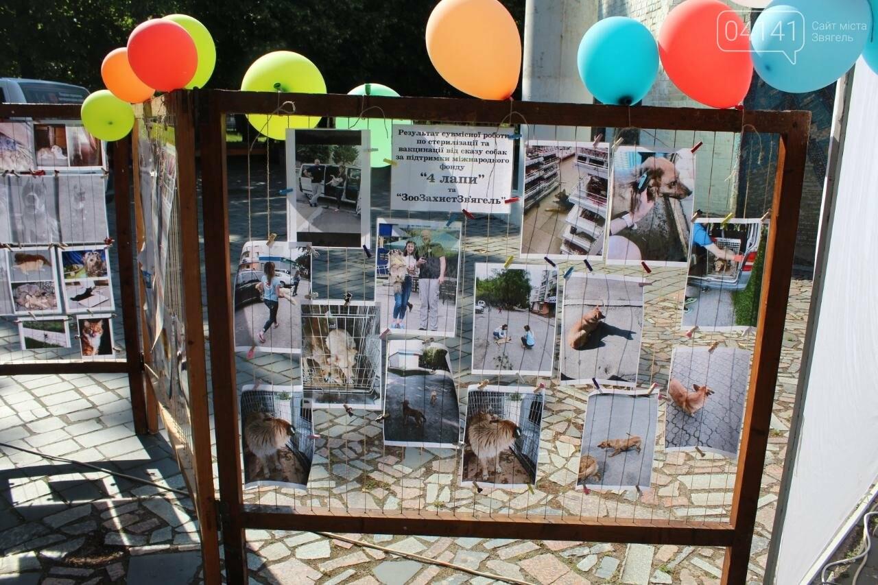Мі-мі 2019: У Новограді-Волинському проходить фестиваль домашніх тварин (ФОТО, ВІДЕО), фото-2