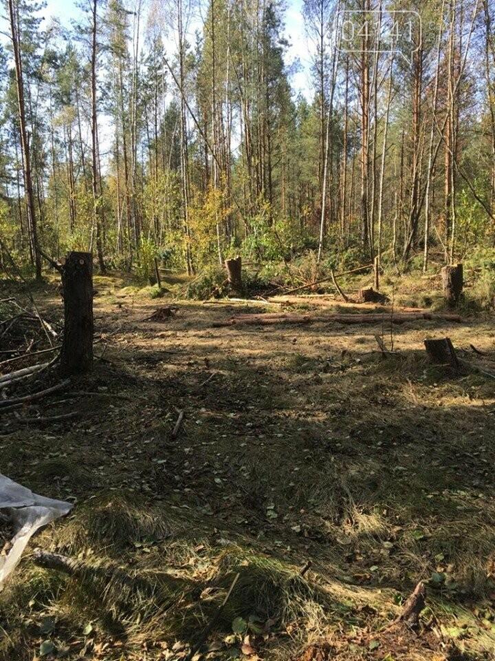 У Новоград-Волинському районі намагались вивезти лісопродукцію на суму 177 тис. 577 грн., фото-1