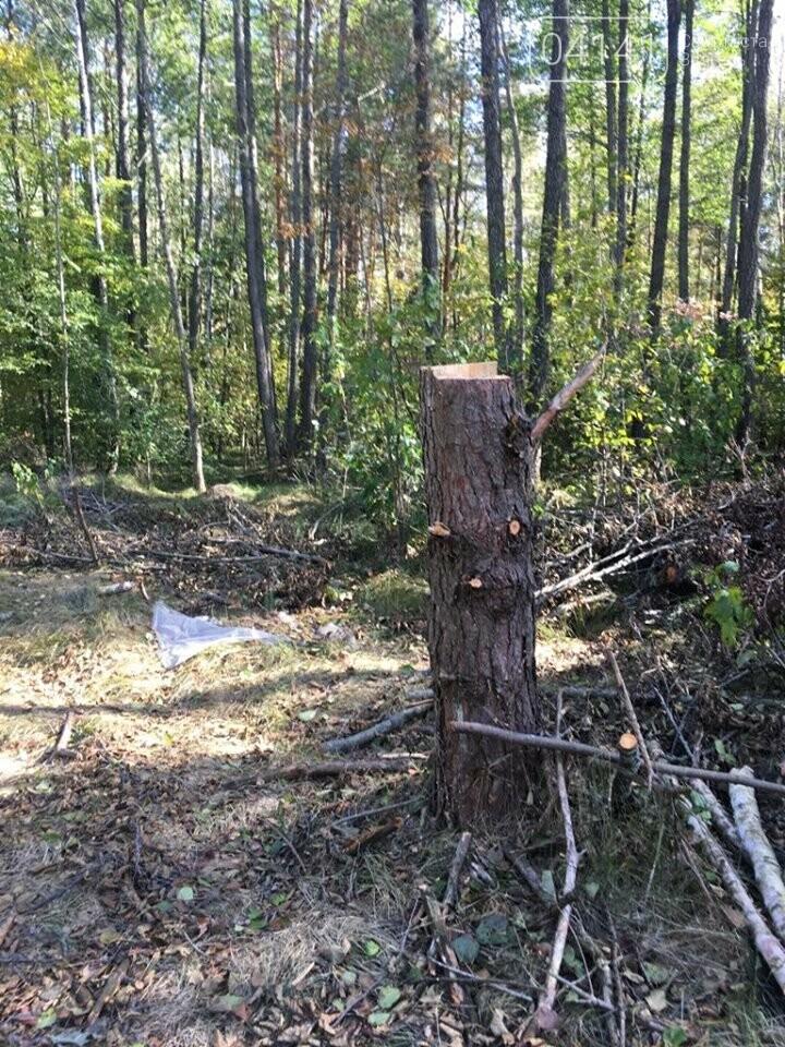 У Новоград-Волинському районі намагались вивезти лісопродукцію на суму 177 тис. 577 грн., фото-3