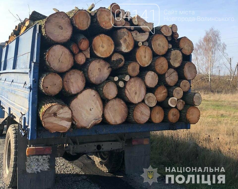 На Новоград-Волинщині викрили масштабну схему розкрадання лісу для експорту, фото-3