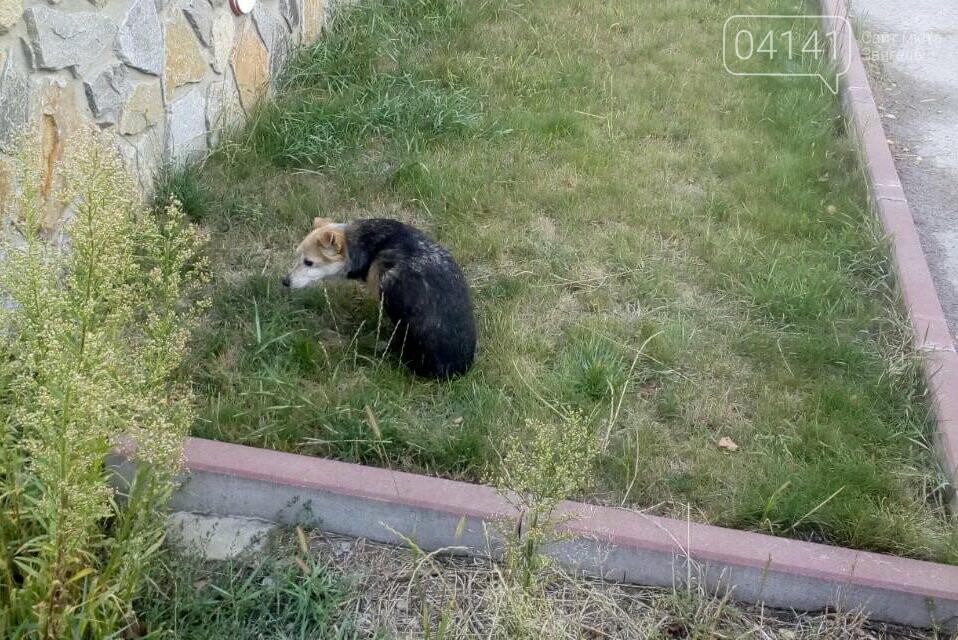 У Новограді-Волинському рятувальники дістали пса із закинутого колодязя, фото-1