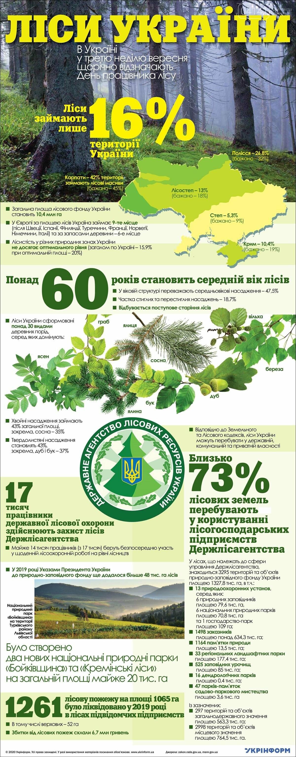 Сьогодні День працівника лісу: Ліси України (ІНФОГРАФІКА), фото-1