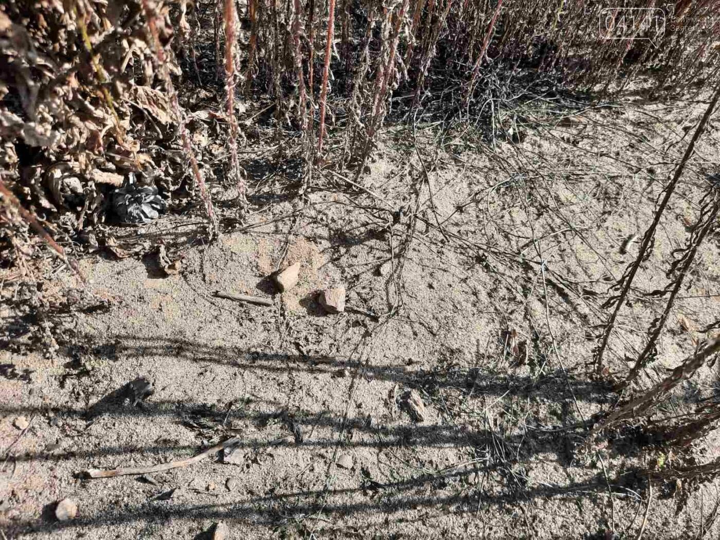 Залишки давнього поселення бронзової доби виявили на Новоград-Волинщині , фото-9