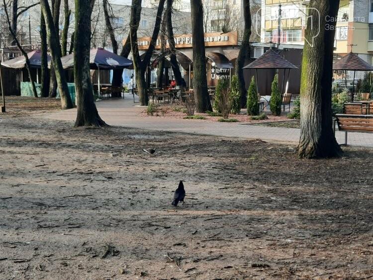 Загиджений парк воронами: Проблема яку місцева влада Новограда воліє не помічати, фото-4