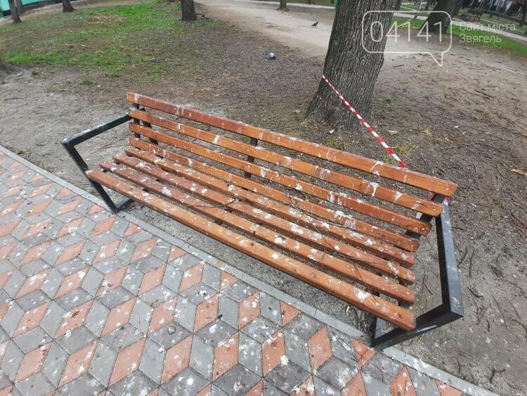 Загиджений парк воронами: Проблема яку місцева влада Новограда воліє не помічати, фото-1
