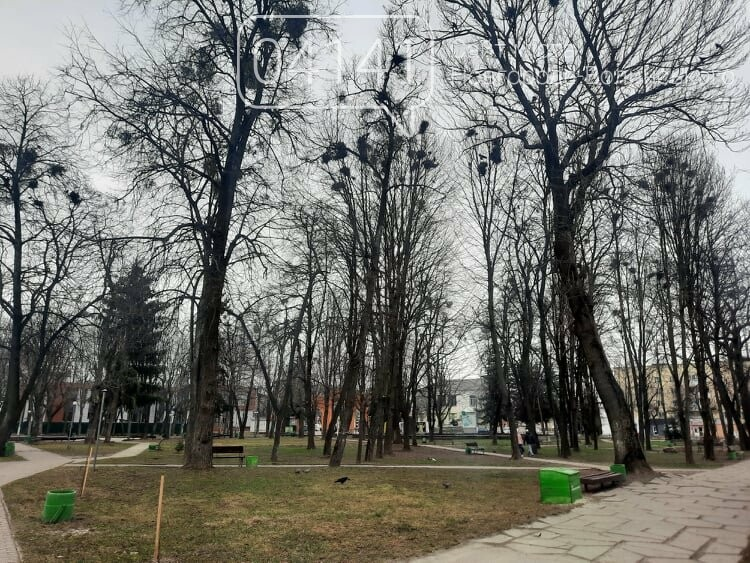 Загиджений парк воронами: Проблема яку місцева влада Новограда воліє не помічати, фото-6