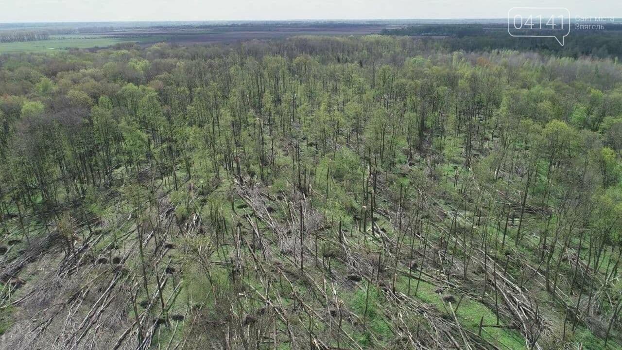 На Новоград-Волинщині пройшов смерч: Повалив сотні дерев (ФОТО, ВІДЕО), фото-1