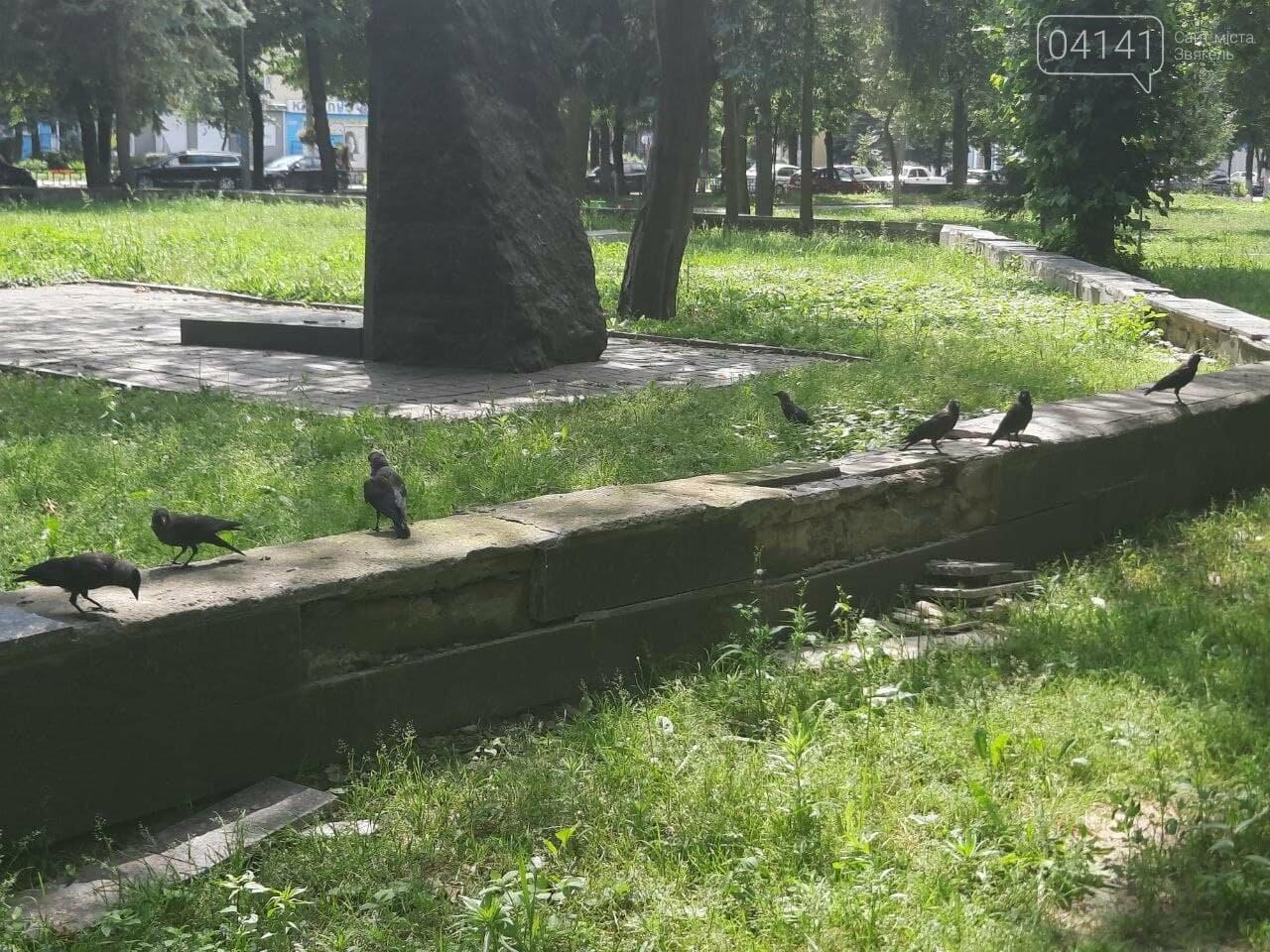 Краще навіть у Чорнобилі: Парк культури та відпочинку в Новограді-Волинському (ФОТО), фото-19