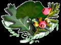 Декор 3вягель Сад, Новоград, озеленення, благоустрій, та ланшафтний дизайн Новоград-Волинський