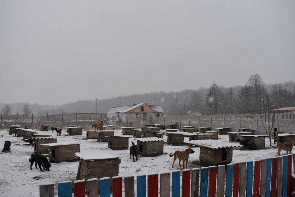 У Новограді-Волинському перевірили умови утримання безпритульних тварин громадською організацією «Захист тварин «Оберіг», фото-4