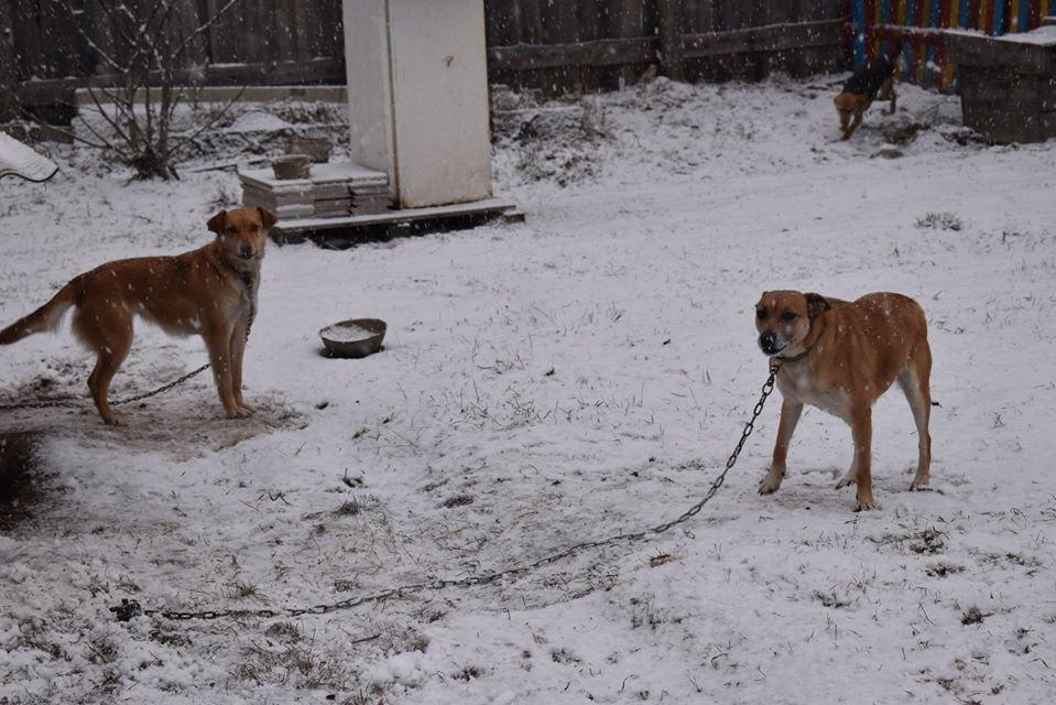 У Новограді-Волинському перевірили умови утримання безпритульних тварин громадською організацією «Захист тварин «Оберіг», фото-5