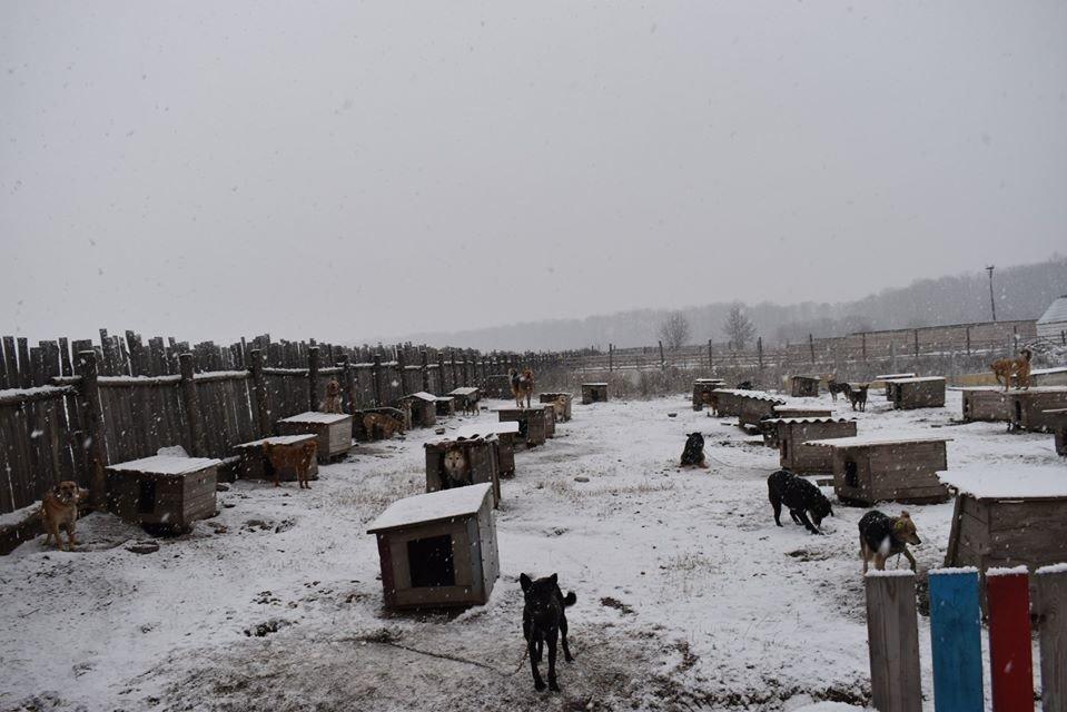 У Новограді-Волинському перевірили умови утримання безпритульних тварин громадською організацією «Захист тварин «Оберіг», фото-9
