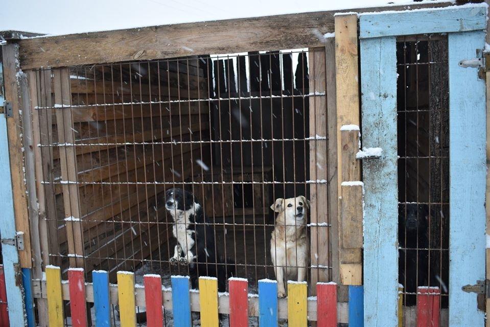 У Новограді-Волинському перевірили умови утримання безпритульних тварин громадською організацією «Захист тварин «Оберіг», фото-1