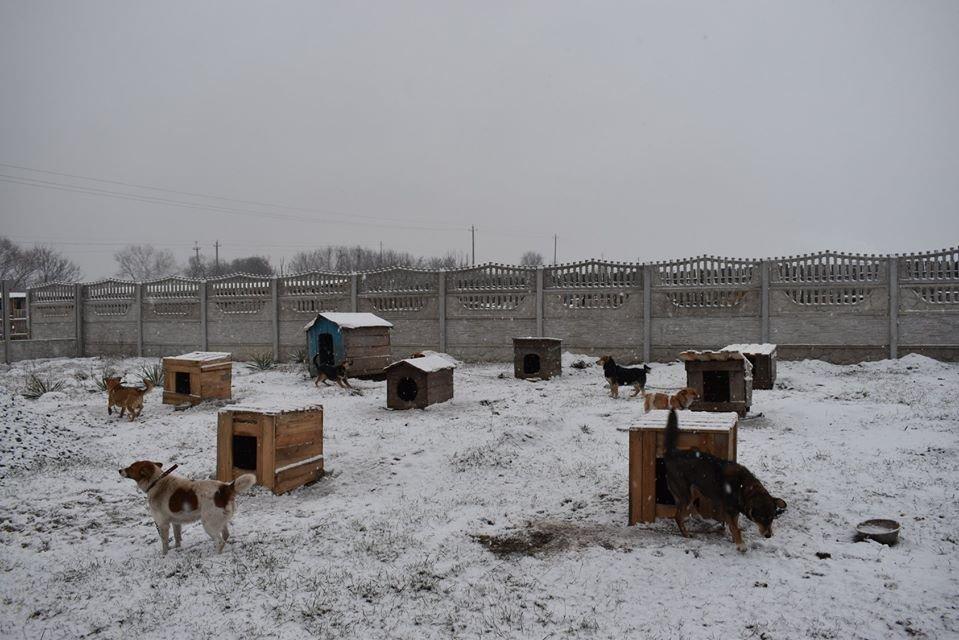 У Новограді-Волинському перевірили умови утримання безпритульних тварин громадською організацією «Захист тварин «Оберіг», фото-6