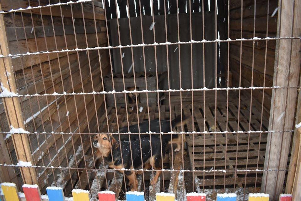 У Новограді-Волинському перевірили умови утримання безпритульних тварин громадською організацією «Захист тварин «Оберіг», фото-7