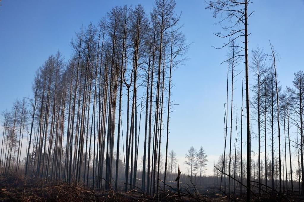Річниця лісових пожеж: які висновки зроблено, фото-2