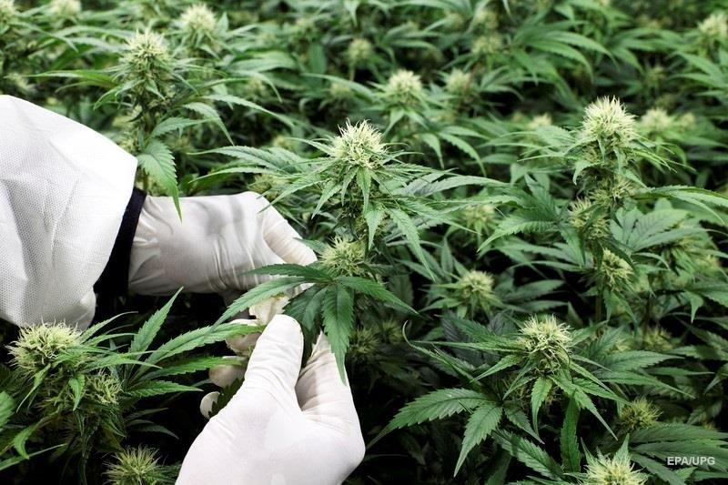 Плюсы употребления конопли наказания за хранения марихуаны до 1 грамма