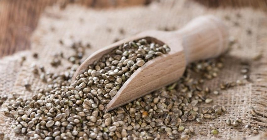 Конопля семена не запрещены порох лен конопля